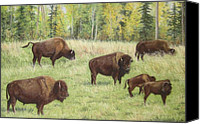 Bison Pastels Canvas Prints - Grazing Buffaloes Canvas Print by Sabina Bonifazi