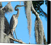 Don L Williams Canvas Prints - Great Blue Canvas Print by Don L Williams