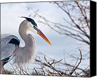 Wetlands Canvas Prints - Great Blue Heron at Wakodahatchee Wetlands Canvas Print by Michelle Wiarda