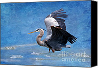 Herons Canvas Prints - Great Blue Heron  Canvas Print by Betty LaRue