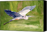Swamp Canvas Prints - Great Blue Heron Canvas Print by Pauline Ross