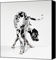 Great Dane Canvas Prints - Great Dane Canvas Print by Michael Blann
