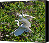 Great Egret Canvas Prints - Great Egret in Flight Canvas Print by Louise Heusinkveld