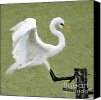 Great Egret Canvas Prints - Great Egret in Green Canvas Print by Betty LaRue