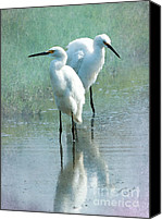 Great Egret Canvas Prints - Great Egrets Canvas Print by Betty LaRue