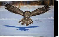 Jim Cumming Canvas Prints - Great Gray Owl ...in your face Canvas Print by Jim Cumming