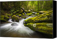 Gatlinburg Canvas Prints - Great Smoky Mountains Gatlinburg TN Roaring Fork - Gift of Life Canvas Print by Dave Allen
