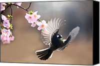 Pink Flower Branch Canvas Prints - Great Tit Canvas Print by By Giseong Na