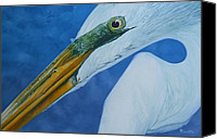 Jon Ferrentino Canvas Prints - Great White Egret Canvas Print by Jon Ferrentino