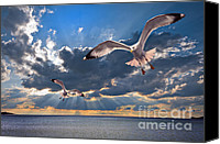 Gull Photo Canvas Prints - Greek Gulls With Sunbeams Canvas Print by Meirion Matthias