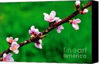 Tree Blossoms Canvas Prints - Green and Pink of Spring Canvas Print by Thomas R Fletcher