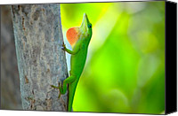 Chameleon Canvas Prints - Green Anole Canvas Print by Rich Leighton
