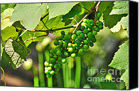 Photograhy Canvas Prints - Green Berries Canvas Print by Kaye Menner