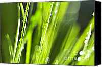 Blade Canvas Prints - Green dewy grass  Canvas Print by Elena Elisseeva