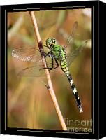 Dragonfly Art Canvas Prints - Green Dragonfly in the Marsh with Border Canvas Print by Carol Groenen