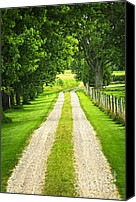 Alley Canvas Prints - Green farm road Canvas Print by Elena Elisseeva