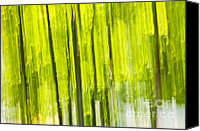 Outdoor Canvas Prints - Green forest abstract Canvas Print by Elena Elisseeva