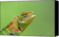 Lizard Canvas Prints - Green Forest Lizard Canvas Print by Saranga Deva De Alwis