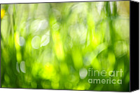 Dandelions Canvas Prints - Green grass in sunshine Canvas Print by Elena Elisseeva