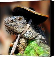 Lizard Canvas Prints - Green Iguana Canvas Print by Craig Incardone