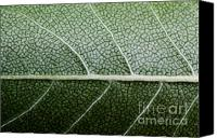 (c) 2010 Canvas Prints - Green Leaf Geometry Canvas Print by Ryan Kelly
