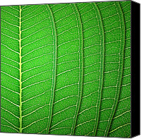 Pure Pyrography Canvas Prints - Green Leaf Texture Canvas Print by Natthawut Punyosaeng