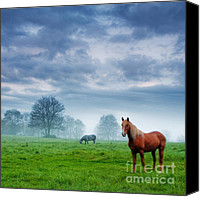 Stallion Canvas Prints - Green Morn Canvas Print by Evgeni Dinev