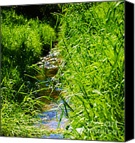 Fine Art Photo Canvas Prints - Green Nature Canvas Print by Kristin Kreet