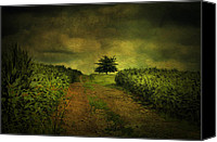 Country Scenes Canvas Prints - Green On Green Canvas Print by Emily Stauring