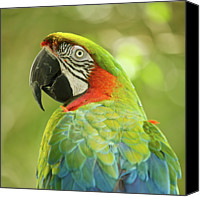 Parrot Canvas Prints - Green Parrot On Green Background Canvas Print by Roni Delmonico