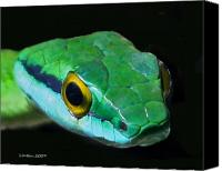 Green Photo Canvas Prints - Green Parrot Snake Canvas Print by Larry Linton