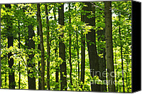 Outdoor Canvas Prints - Green spring forest Canvas Print by Elena Elisseeva