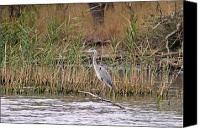Bulgaria Canvas Prints - Grey Heron Canvas Print by Tony Murtagh