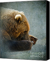 Mammals Canvas Prints - Grizzly Bear Lying Down Canvas Print by Betty LaRue