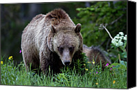 Cub Canvas Prints - Grizzly Bear Sow In Wildflowers Canvas Print by Rob Daugherty - RobsWildlife.com