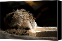 Dog Bed Photo Canvas Prints - Groggy Morning  Canvas Print by Monte Arnold