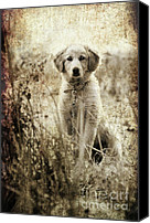 Mono Canvas Prints - Grunge Puppy Canvas Print by Meirion Matthias