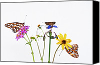 Gulf Coast States Canvas Prints - Gulf Fritillary And Brown Skipper Canvas Print by Jim McKinley
