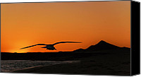 Gull Photo Canvas Prints - Gull at Sunset Canvas Print by Dave Dilli