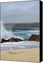 Sennen Canvas Prints - Gull on the sand Canvas Print by Linsey Williams