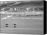 Seashore Canvas Prints - Gulls Taking a Walk Canvas Print by Cindy Lee Longhini