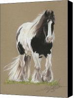 Equestrian Pastels Canvas Prints - Gypsy Horse Paddy Canvas Print by Terry Kirkland Cook