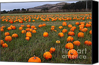Melon Canvas Prints - Halloween Pumpkin Patch 7D8388 Canvas Print by Wingsdomain Art and Photography