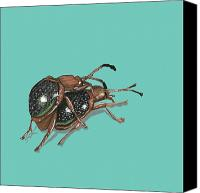 Insects Painting Canvas Prints - Handsome Fungus Beetles Canvas Print by Jude Labuszewski