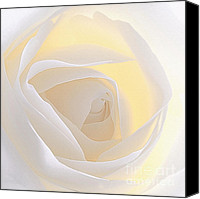 White Rose Canvas Prints - Hankering Canvas Print by Kristin Kreet