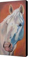 Andalusian Horse Canvas Prints - Hannocka Canvas Print by Anne West
