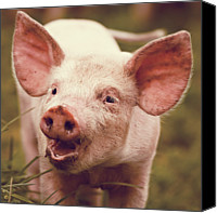 Pig Photo Canvas Prints - Happy Little Piglet Canvas Print by Liesel Conrad