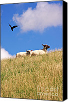 Black Crow Canvas Prints - Happy Sheep Canvas Print by Angela Doelling AD DESIGN Photo and PhotoArt