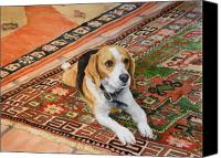 Beagle Canvas Prints - Harley Canvas Print by Debra Jones