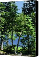 Evergreens Canvas Prints - Harmony in Green and Blue - Manzanita Lake - Lassen Volcanic National Park CA Canvas Print by Christine Till